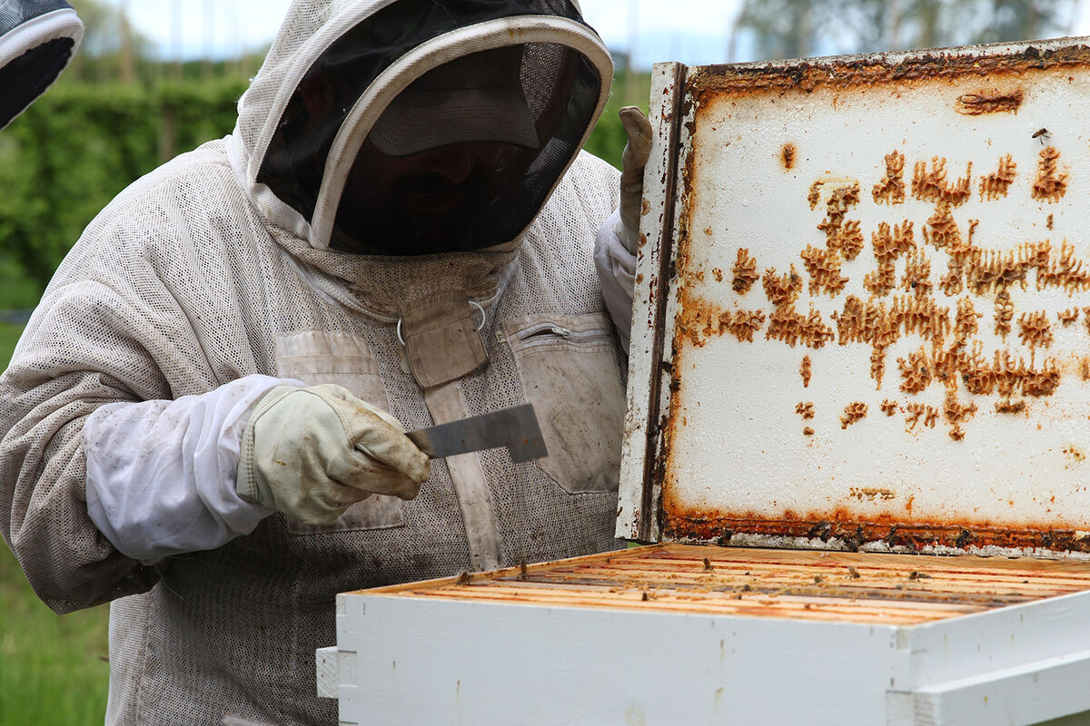 Rogue Farms Beekeeper George watches over our 7,140,289 honeybees.