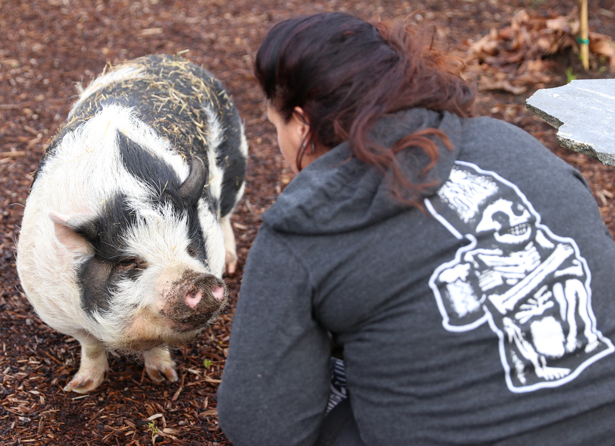 Stacia with one of our Pot Bellied Pigs