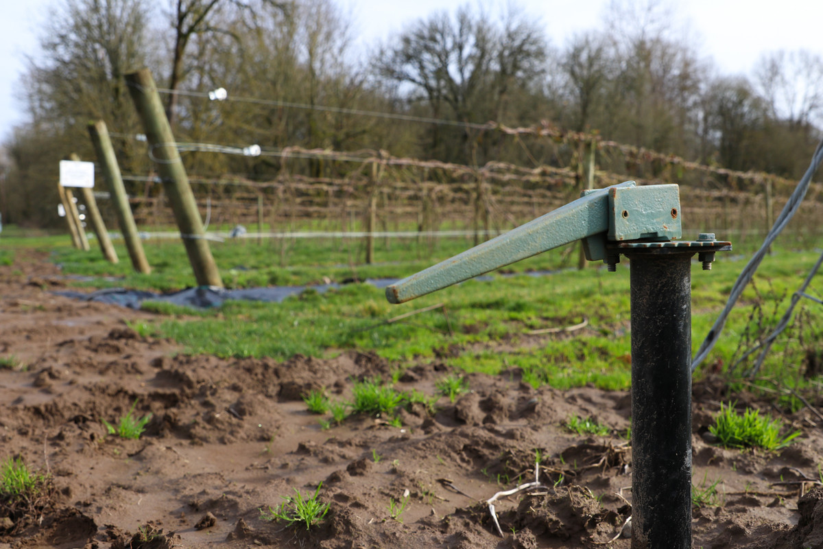 The new drip irrigation system in the Prickless Marionberry field.