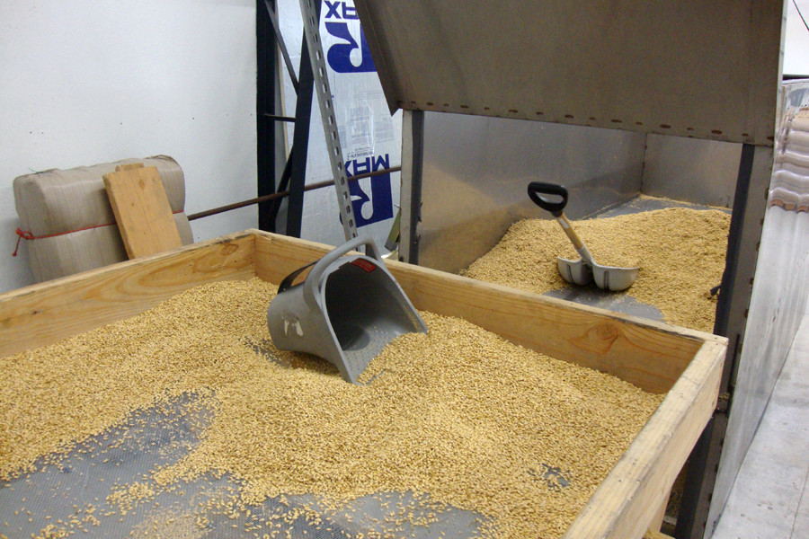 The sifting table in the Farmstead Malt House. Sifting the malted barley over the screen removes chits and acropsires.