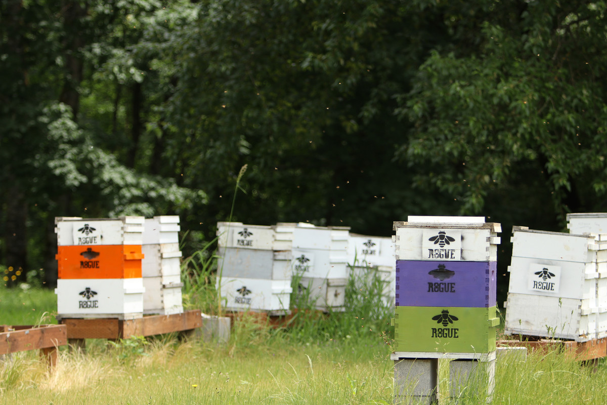 Our Rogue Farms Honeybees live in hives.